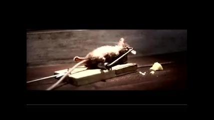 Мишчица гризанка