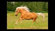 Орхан Мурад - Седем бели коня + текст