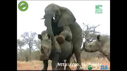 Слон чука Носорог - -