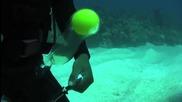 Kакво става когато счупите яйце под вода?
