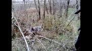 """Колеж-""""кърчев""""-курцхар Фокер лов на фазани 2011г"""