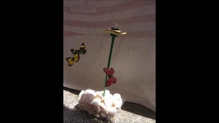 Соларни пеперуди