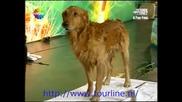 Турция търси Таланти - Неверояно куче и неговите умения