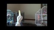 Див папагал куфее на Michael Jackson