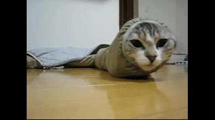 Котката Змия