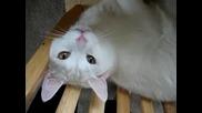 Котка която може да говори - смях
