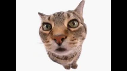 Бтв: Ненормалниците от котколандия