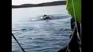 Момиче пощурява когато вижда кит в открито море