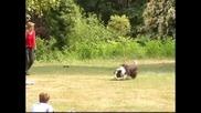 Закон във Великобритания забранява притежанието на опасни кучета