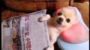 Кученце разпуска на масажираща възглавница.