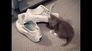 Котенце, Огледало И Обувки