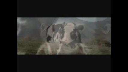 Лудата Крава Пародия