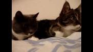 Две Котенца Си Говорят