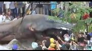 Откриха чудовище - гигант!