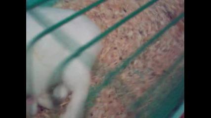 Хъркащото зайче ! ! !