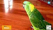 Дяволският смях на един забавен папагал