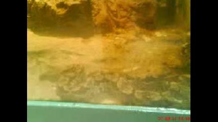 Снимки от зоогическата градина в град софия - 3 част