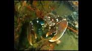 Подводна Импресия