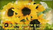Дарите жлтые цветы! Не верьте злым приметам.