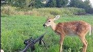 Бамби не се страхува от оръжие