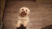 Сладки кученца и Harlem shake - suniukai