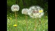 Flower gajdi