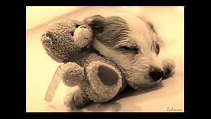 сладки животинки-снимки