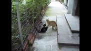 Котешки бой - Не е за изпускане!