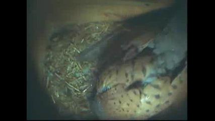 Falco5smyanaptici.avi