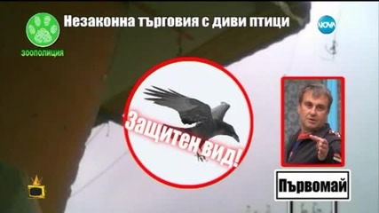 Незаконна търговия с диви птици 2 - Господари на ефира (01.06.2015)