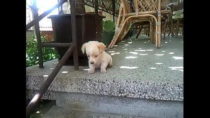 Много сладко кученце