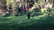 Палаво мече се забавлява на зелена полянка - Голф Игрище
