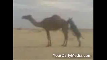 Магаре Изнасилва Камила 18+