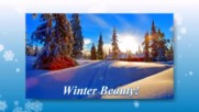 Зимна красота! ... ...