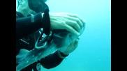 """Леководолаз спасява от рибарска кука , силно отровната риба """"балон"""""""