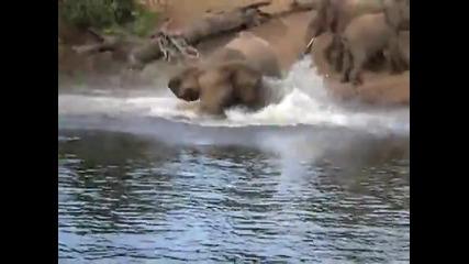 Слон срещу крокодил