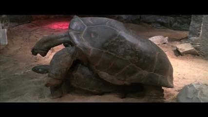 Свалка между костенурки се превърна в оргазъм