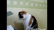 Котка Се Шашка От Принтер:)))