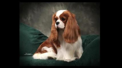 10те най-красиви кучета на света!