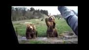 Животни имитират хора
