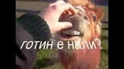 На лов За Пони