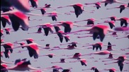 Deftones - Prayers-triangles (official Audio)