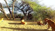 Танзания 3, Хадзабе- последните ловци на саваната (''Без багаж'', еп.186)