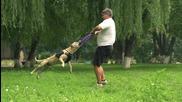 Куче Тренира Паркур..