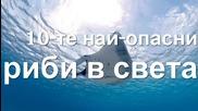 10-те най-опасни риби в света