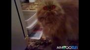 Пияна котка говори несвързано - смях до насиране ?!?!
