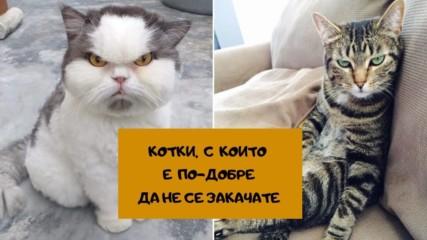 Котки, с които е по-добре да не се закачате