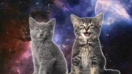 Пеещи котенца