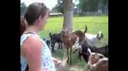 Претенциозна коза