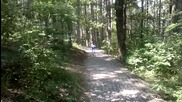 Разходка в гората ...